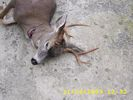 Coues & Blacktail