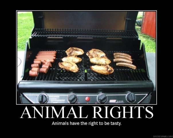 animal rights.jpg