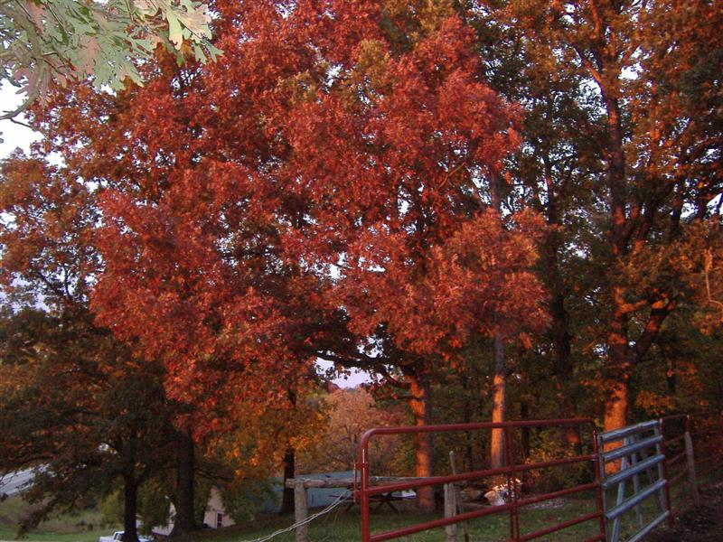 fall colors 011 (medium).jpg